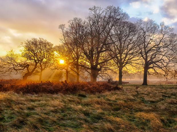 The morning sun bursting through the trees at Richmond Park, London (DSCF2631)