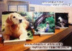 フォトパネルのコピー.jpg
