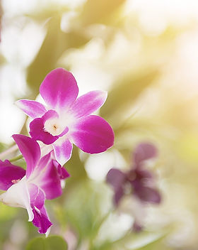 orchid-2721756_1280.jpg