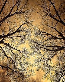 tree-3044200_1280.jpg