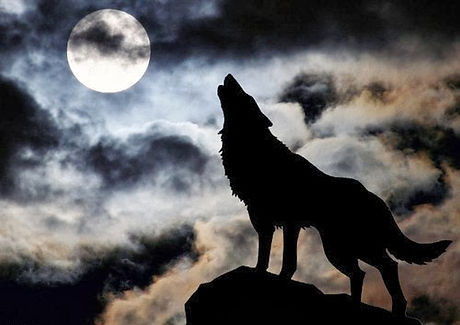 lobo luna.jpg