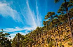 bosque tlazala