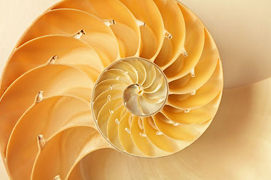 Yellow shell spiral
