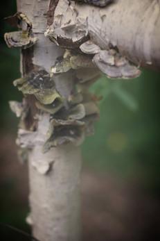 Tree lichens in Sandra's garden