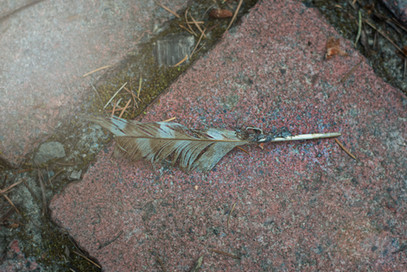 A feather on the ground outside the Institute