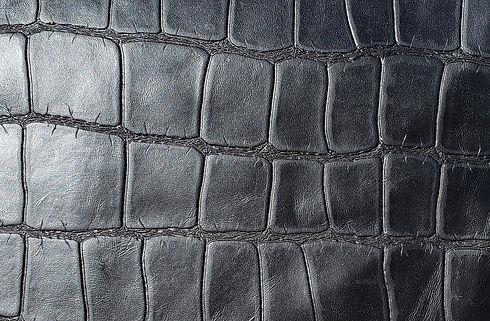 Black large scale alligator.jpg