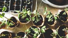 3 Budget-Friendly Gardening Tips for Seniors