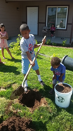 Planting Trees for Neighbors