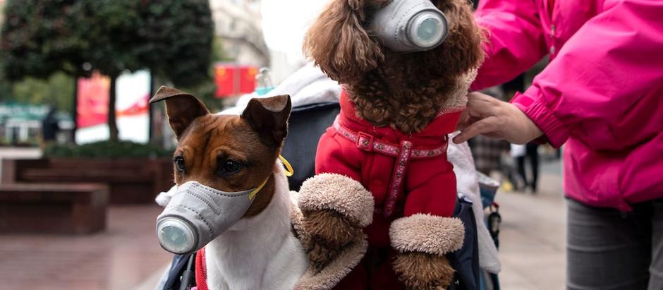 Собаки, взуття і пальта: що треба дезінфікувати у часи коронавірусу