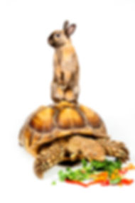 Tortoise and rabbit animal ambssadors for school, camp, event, party presentations. Mississauga, Bramton, Guelph, Waterloo, Caledon, Orangeville, Milton