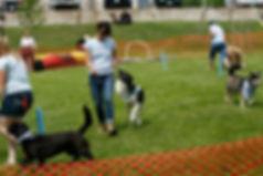 advanced dog training thunder bay