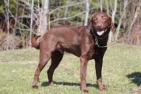 dog training thunder bay