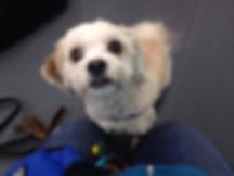 small dog training thunder bay