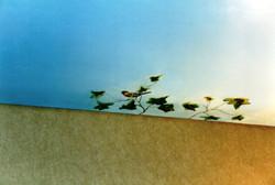 Mural sky detail