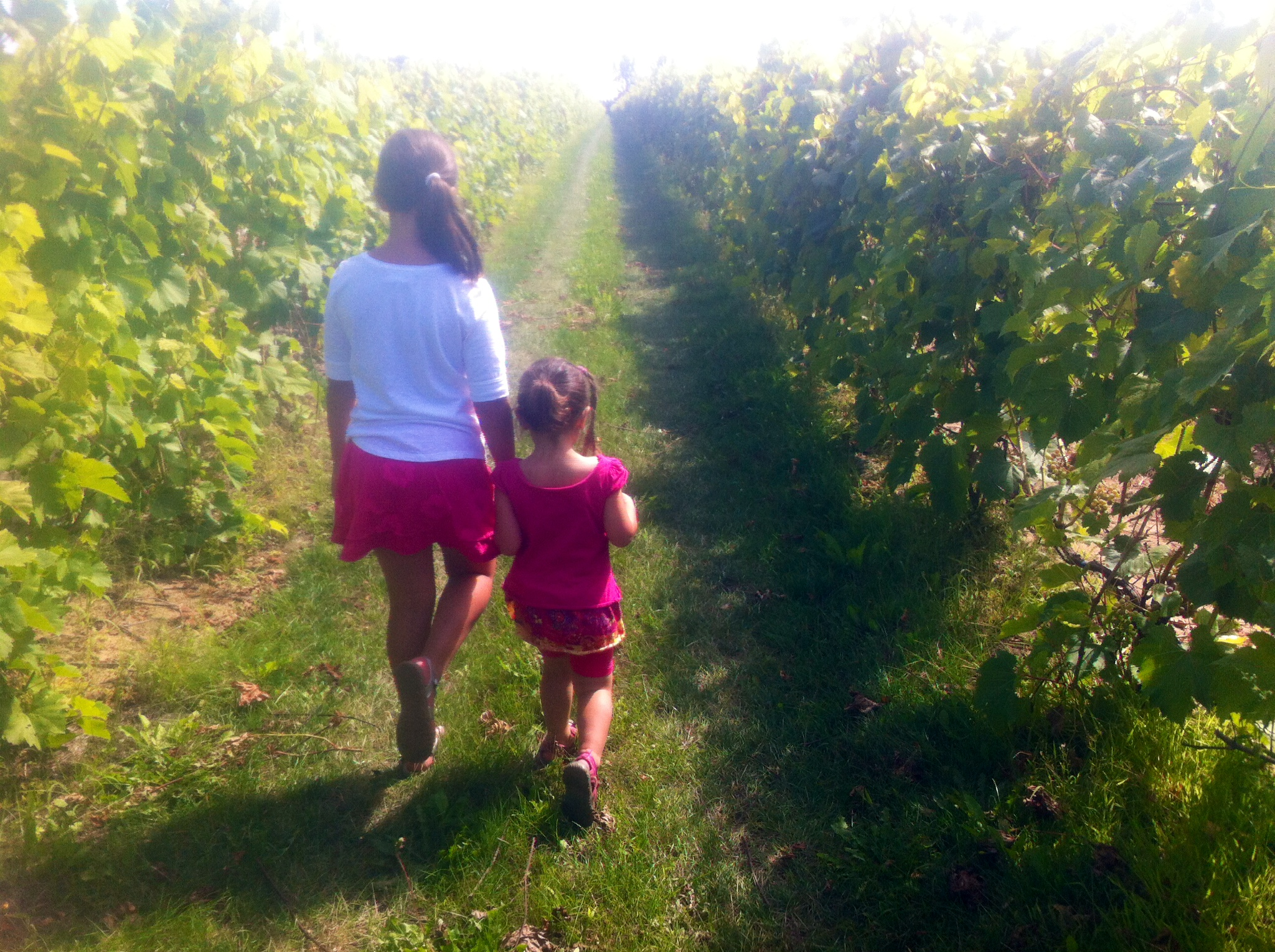 fillettes en balade au vignoble.jpg