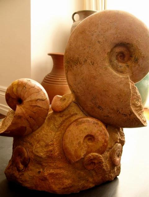 Madagascar fossil ammonites