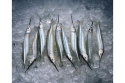 072-Baby-Swordfish-professional-food-pho