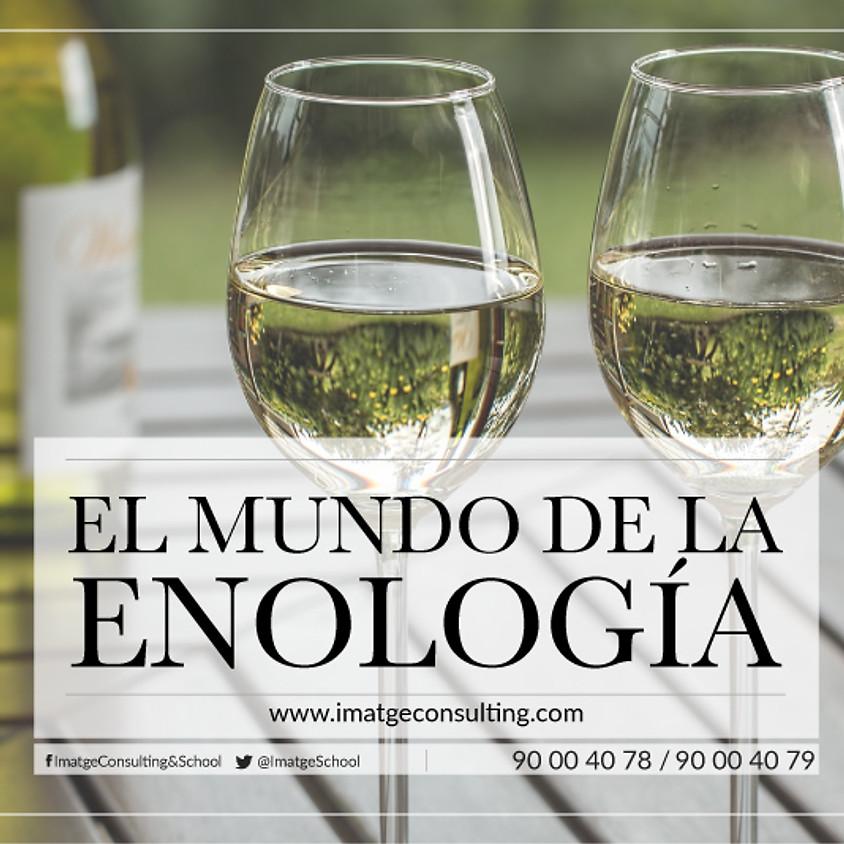 TALLER EL MUNDO DE LA ENOLOGÍA