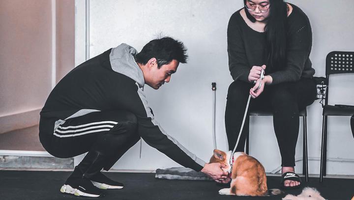 Photography 2 for Pawllege Pet School