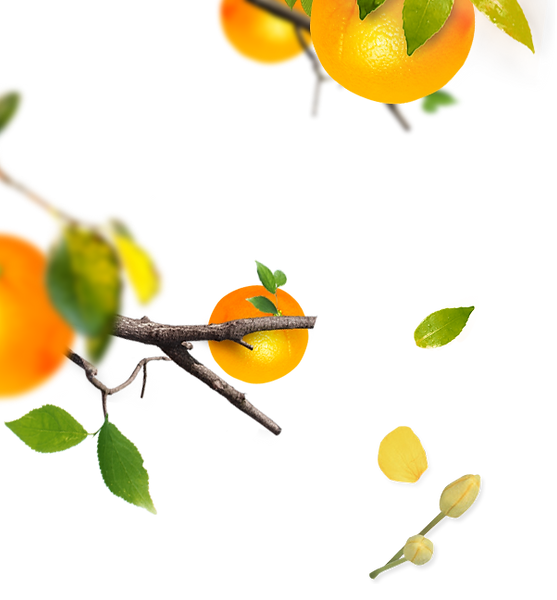 IMGBIN_orange-tree-material-png_bKPHDkeb
