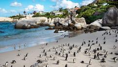 Giant boulders, little penguins.