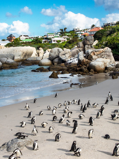 Giant boulders and small penguins.