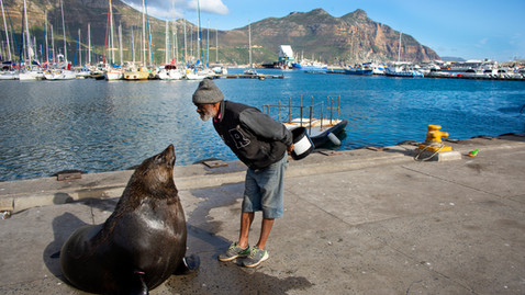 Man and a seal
