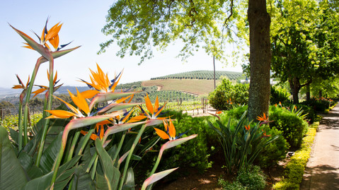 Flowers in a vineyard.