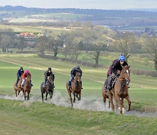 HighfieldGallops_7215_0_edited.jpg