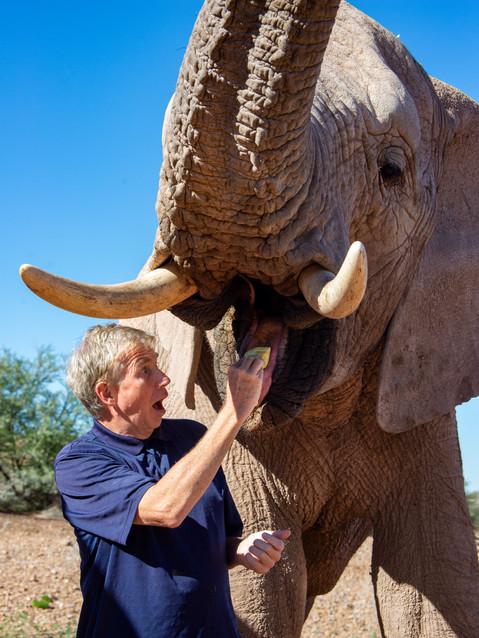 How to feed an elephant.