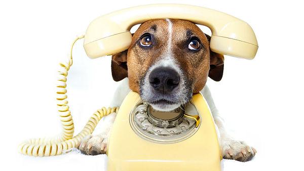 dog-phone.jpg