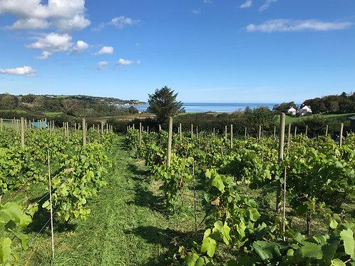 Vineyard Tour, Wine Tasting and Tapas
