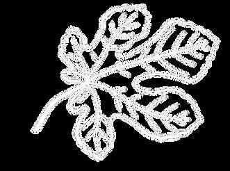 fig leaf vector white png.png