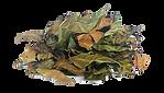 caapi leaf.png