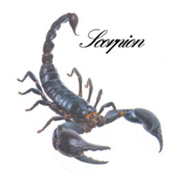 scorpoin.png