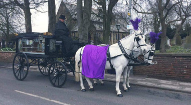 White Horses with Purple Drapes