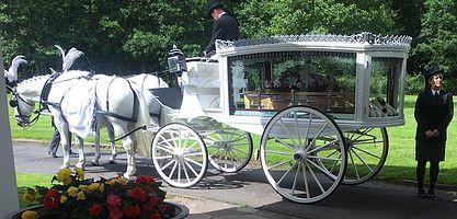 Horse Hearse White