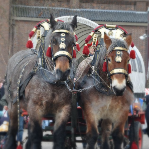 Dickens Festijn Drunen paarden_edited