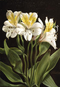 FLOWERS OF THE NEW YORK BOTANICAL GARDEN