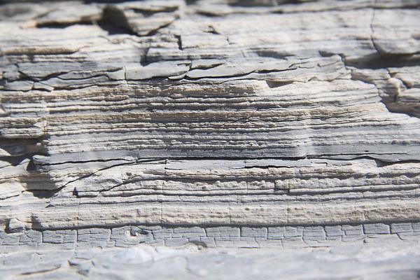 Fossil Butte 03.jpeg