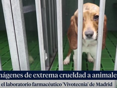 Blutende Beagles, Gewalt gegen Affen, verrohte Laborarbeiter