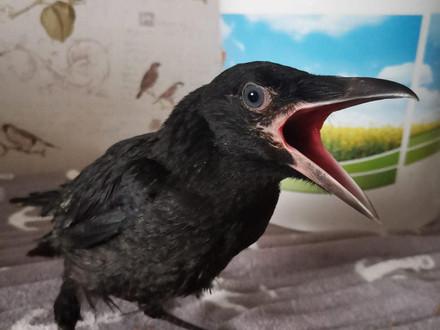 Vogel- & Affenpark Eckenhagen spricht von Falschmeldung