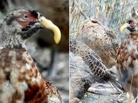 Als wir vor einigen Monaten ähnliche Bilder zeigten, hieß es von den Jägern: Lüge