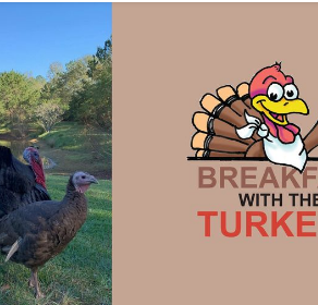 "MS Museum of Natural Science Hosts ""Breakfast with the Turkeys"""