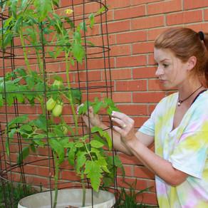 Easy mix for tomato gardens