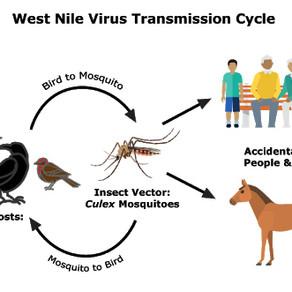 West Nile Virus season begins