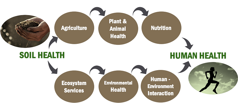 A&L Soil Health to Human Health.png