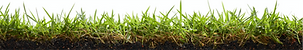 Grass transparent brochure.png