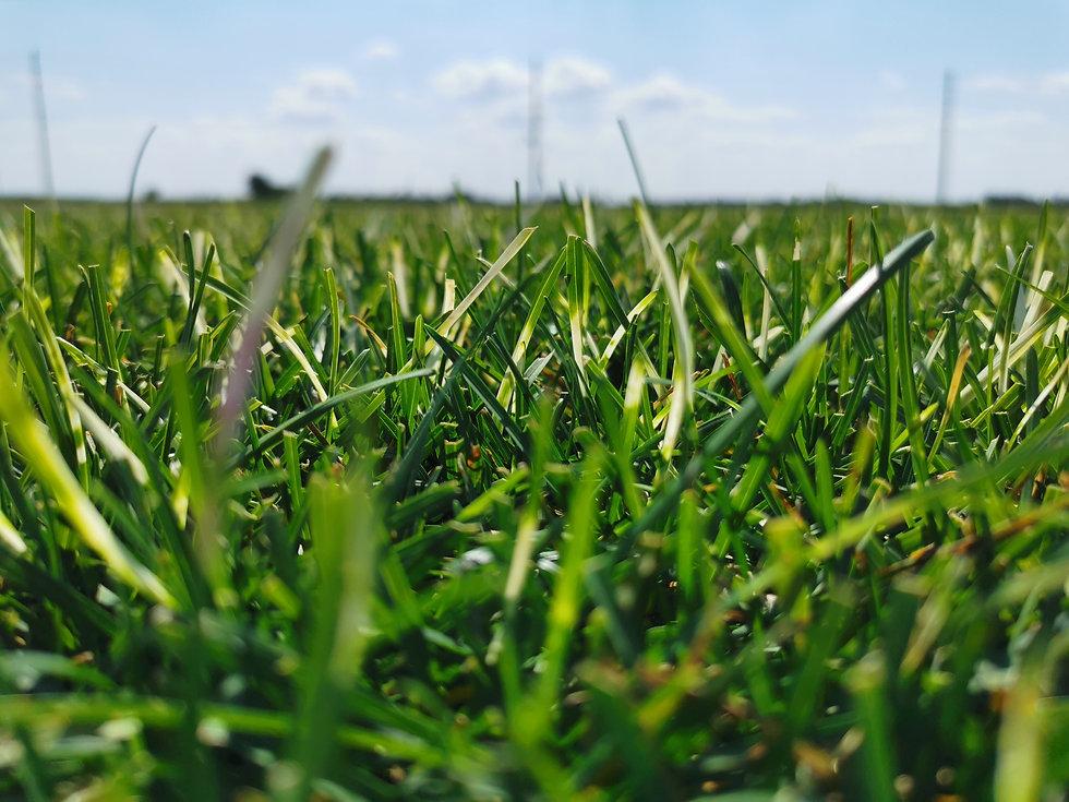 A&L Verified Lawn and Landscape