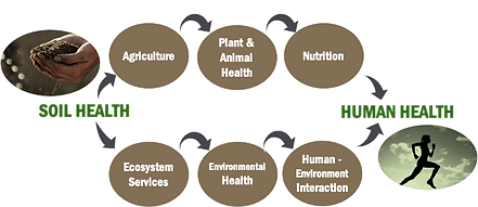 Soil health to Human health.png